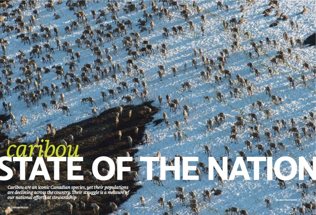 MarApr_2014_Caribou_State_Of_The_Nation